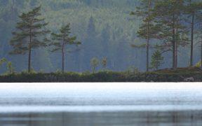 Äganderätten oroar skogsägare som trots det vill köpa mer skog