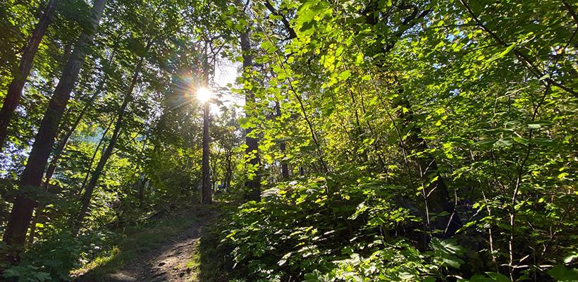 gröna fastighetskrediter, gröna lån, hållbara lån